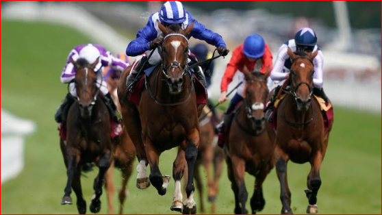 Get Professional Horse Racing Tips To Win Maximum Amount